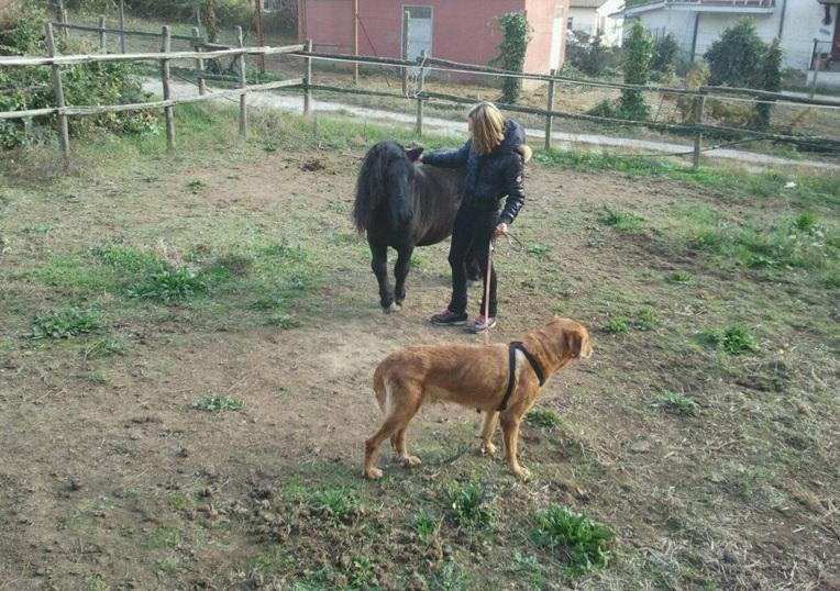 casa-di-riposo-roma-nord-pet-therapy-3