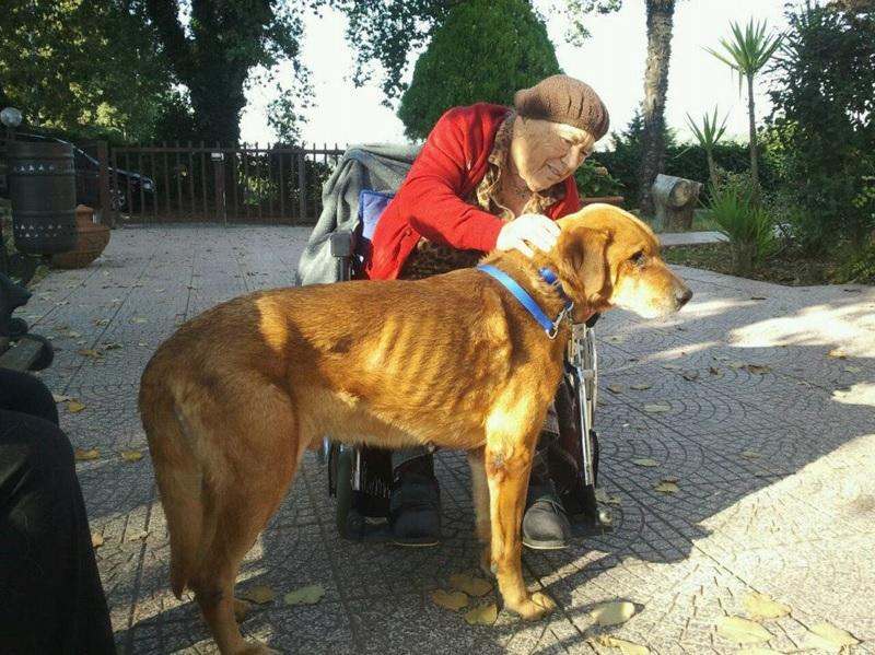 casa-di-riposo-roma-nord-pet-therapy-6